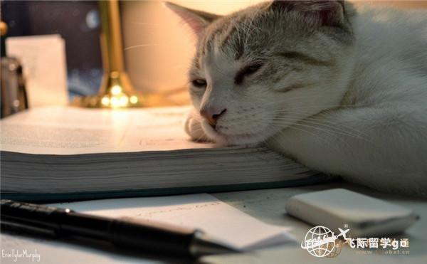 一只猫趴在书上